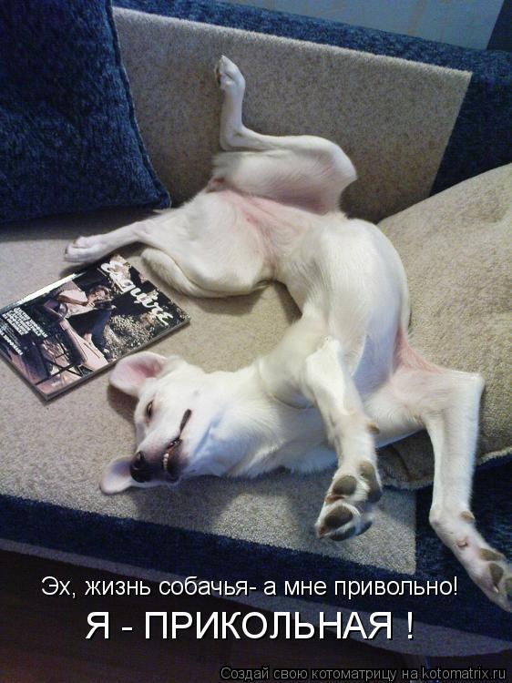 Котоматрица: Эх, жизнь собачья- а мне привольно! Я - ПРИКОЛЬНАЯ !