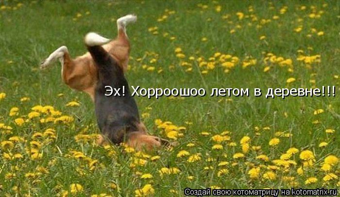 Котоматрица: Эх! Хорроошоо летом в деревне!!!