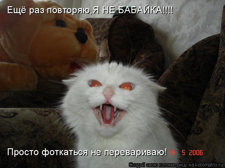 Котоматрица: Ещё раз повторяю,Я НЕ БАБАЙКА!!!! Просто фоткаться не перевариваю!