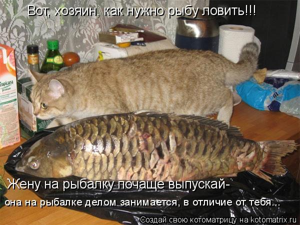 Котоматрица: Вот, хозяин, как нужно рыбу ловить!!! Жену на рыбалку почаще выпускай- она на рыбалке делом занимается, в отличие от тебя...