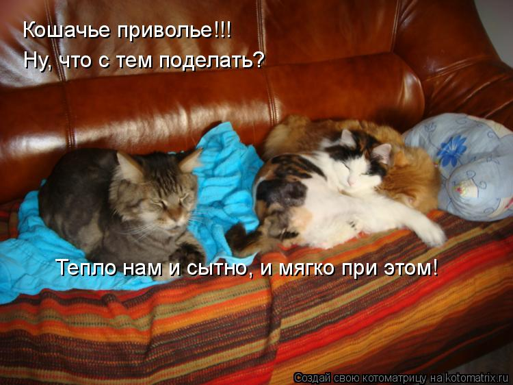 Котоматрица: Кошачье приволье!!! Ну, что с тем поделать? Тепло нам и сытно, и мягко при этом!