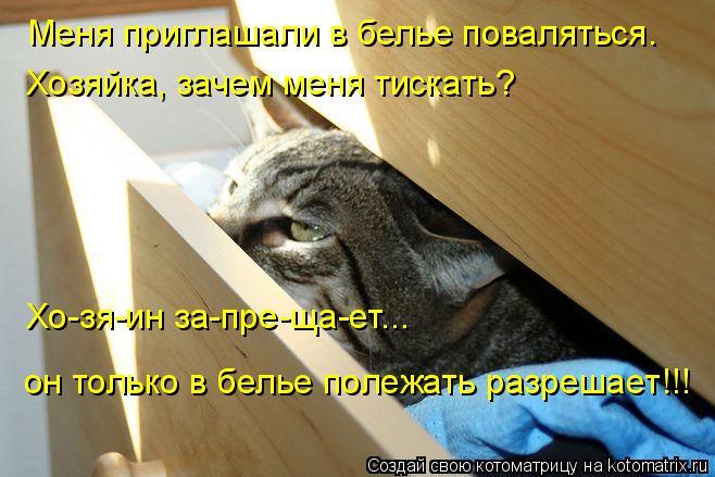 Котоматрица: Меня приглашали в белье поваляться. Хозяйка, зачем меня тискать?  Хо-зя-ин за-пре-ща-ет...  он только в белье полежать разрешает!!!
