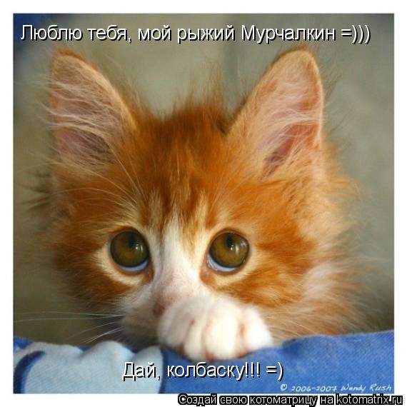 Котоматрица: Люблю тебя, мой рыжий Мурчалкин =))) Дай, колбаску!!! =)