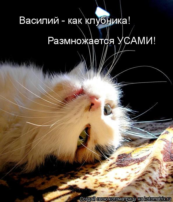 Котоматрица: Василий - как клубника! Размножается УСАМИ!