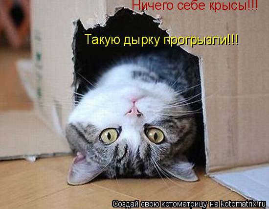 Котоматрица: Ничего себе крысы!!! Такую дырку прогрызли!!! Но я хорош в любой позе!!!