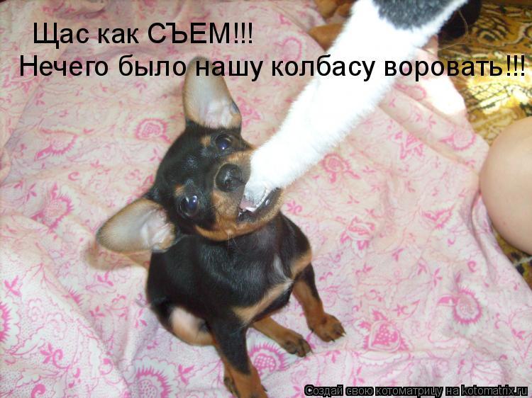 Котоматрица: Щас как СЪЕМ!!! Нечего было нашу колбасу воровать!!!