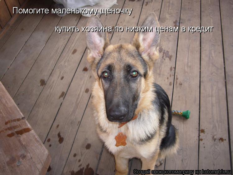 Котоматрица: Помогите маленькому щеночку купить хозяина по низким ценам в кредит
