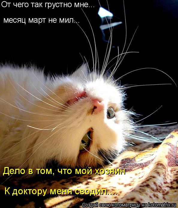 Котоматрица: От чего так грустно мне... месяц март не мил... Дело в том, что мой хозяин К доктору меня сводил....