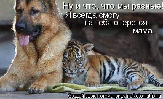 Котоматрица: Ну и что, что мы разные! Я всегда смогу  на тебя оперется,  мама...
