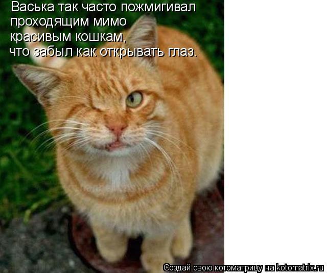 Котоматрица: Васька так часто пожмигивал  проходящим мимо  красивым кошкам,  что забыл как открывать глаз.