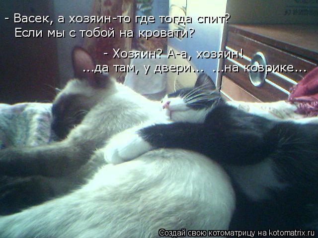 Котоматрица: Если мы с тобой на кровати? - Васек, а хозяин-то где тогда спит? - Хозяин? А-а, хозяин! ...да там, у двери... ...на коврике...