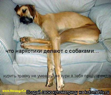 Котоматрица: что наркотики делают с собаками... курить травку не умеешь  не кури я тебя предупреждал