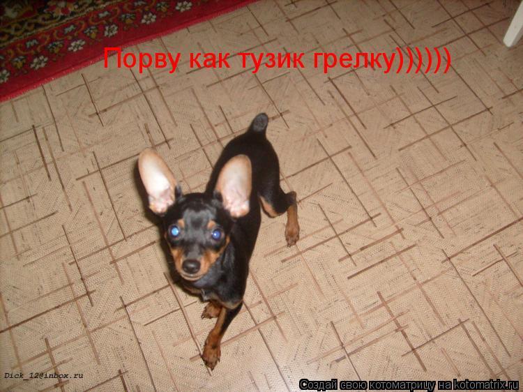 Котоматрица: Порву как тузик грелку))))))