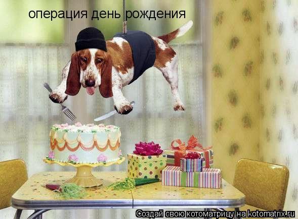 Котоматрица: операция день рождения