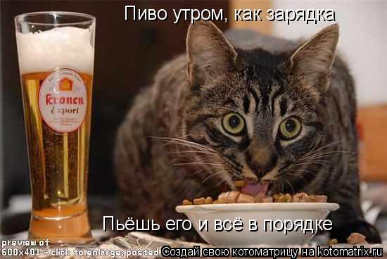 Котоматрица: Пиво утром, как зарядка Пьёшь его и всё в порядке