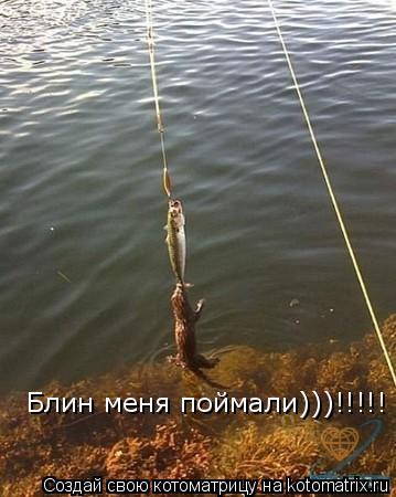 Котоматрица: Блин меня поймали)))!!!!!