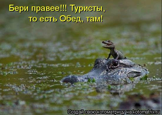 Котоматрица: Бери правее!!! Туристы,  то есть Обед, там!
