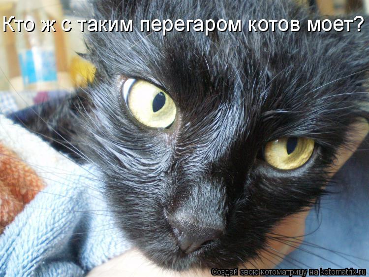 Котоматрица: Кто ж с таким перегаром котов моет?
