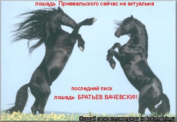 Котоматрица: лошадь  Пржевальского сейчас не актуальна последний писк лошадь  БРАТЬЕВ ВАЧЕВСКИ!!