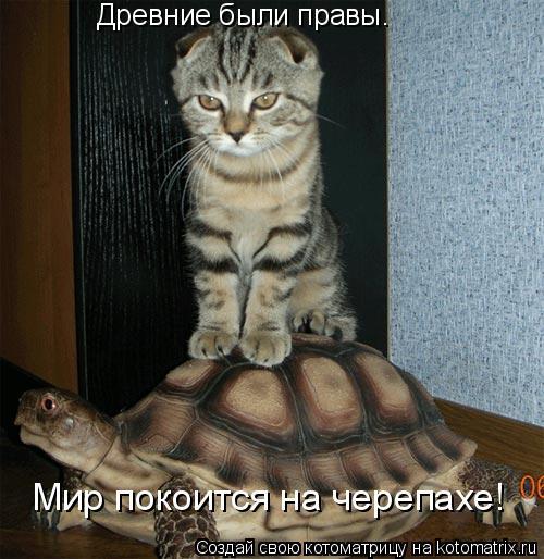 Котоматрица: Древние были правы. Мир покоится на черепахе!