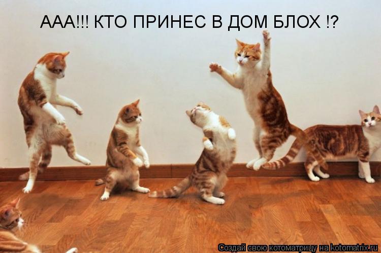 Котоматрица: ААА!!! КТО ПРИНЕС В ДОМ БЛОХ !?