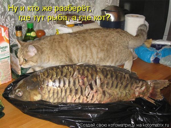 Котоматрица: Ну и кто же разберёт, где тут рыба, а где кот?