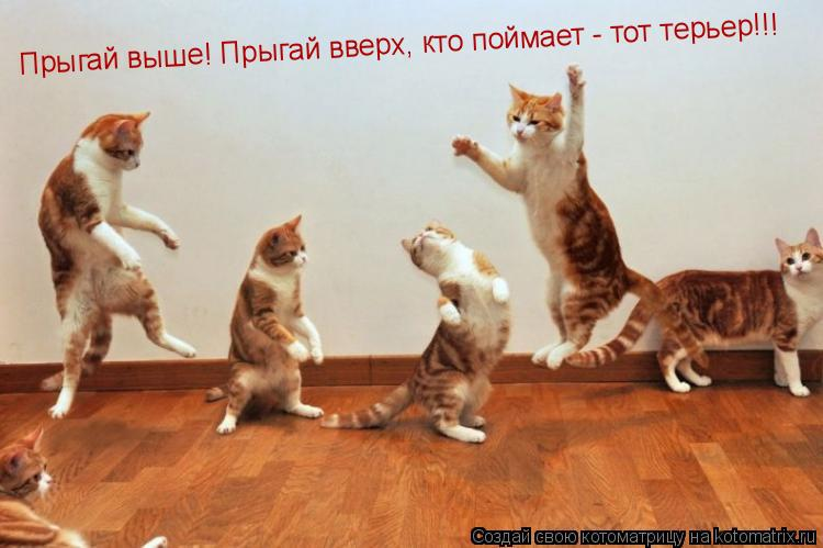 Котоматрица: Прыгай выше! Прыгай вверх, кто поймает - тот терьер!!!
