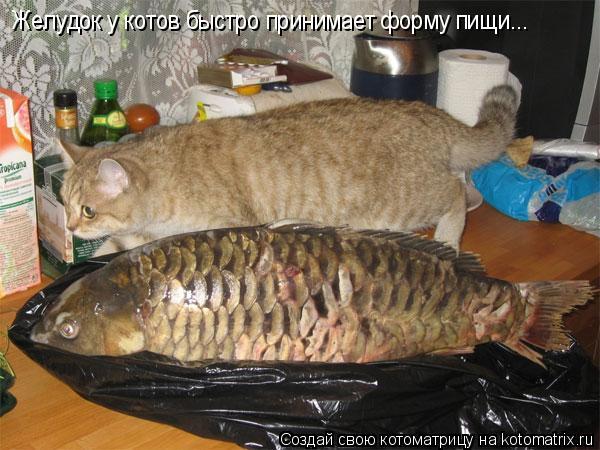 Котоматрица: Желудок у котов быстро принимает форму пищи...