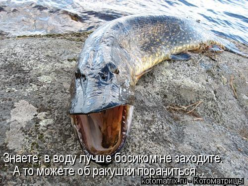 Котоматрица: Знаете, в воду лучше босиком не заходите. А то можете об ракушки пораниться...