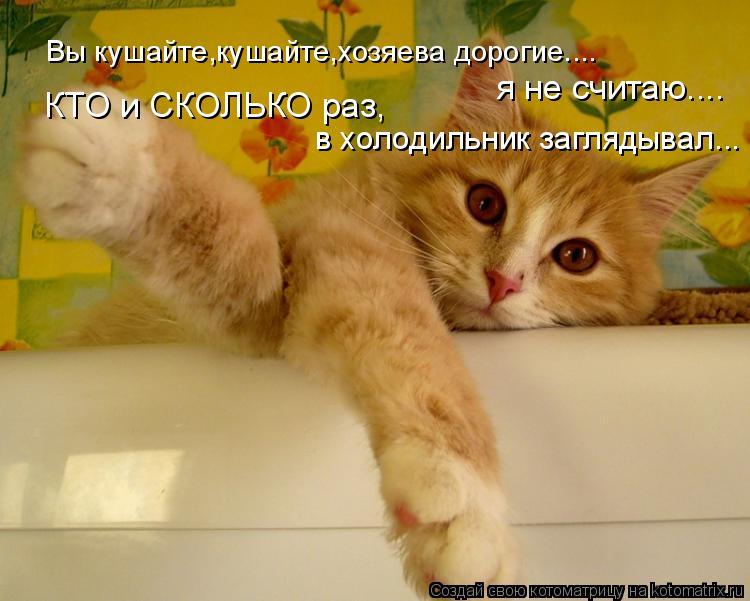 Котоматрица: Вы кушайте,кушайте,хозяева дорогие.... я не считаю.... КТО и СКОЛЬКО раз, в холодильник заглядывал...