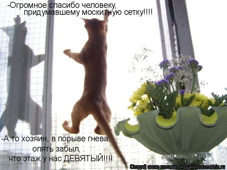 Котоматрица: -Огромное спасибо человеку,  придумавшему москитную сетку!!!! -А то хозяин, в порыве гнева,   опять забыл,  что этаж у нас ДЕВЯТЫЙ!!!!