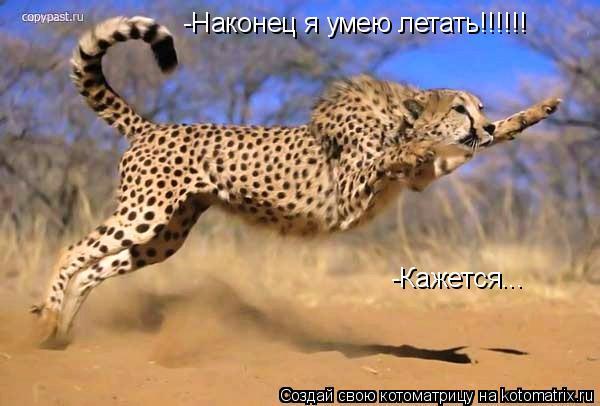 Котоматрица: -Наконец я умею летать!!!!!! -Кажется...