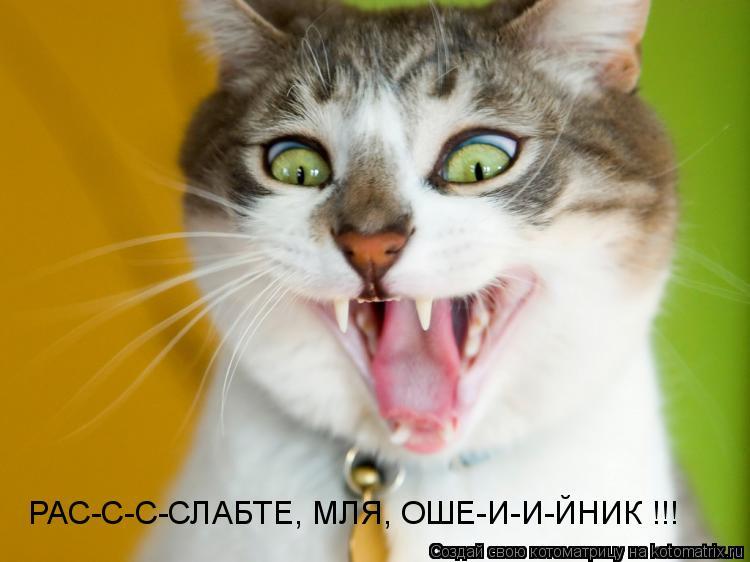 Котоматрица: РАС-С-С-СЛАБТЕ, МЛЯ, ОШЕ-И-И-ЙНИК !!!