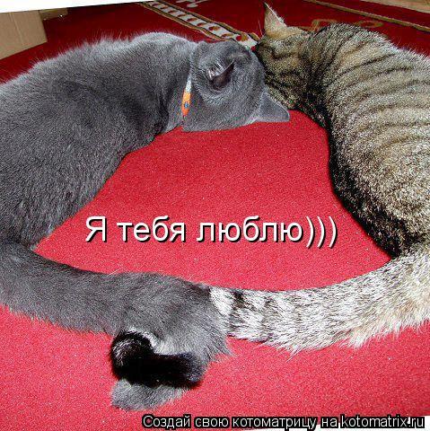 Котоматрица: Я тебя люблю)))