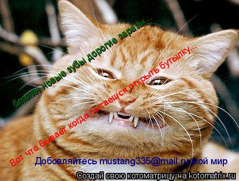 Котоматрица: Вот что бывает когда пытаешся открыть бутылку... блииин новые зубы дорогие заразы... Добовляйтесь mustang335@mail.ru мой мир