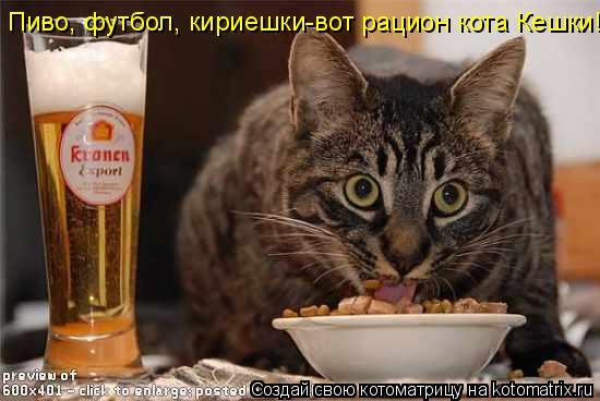 Котоматрица: Пиво, футбол, кириешки-вот рацион кота Кешки!