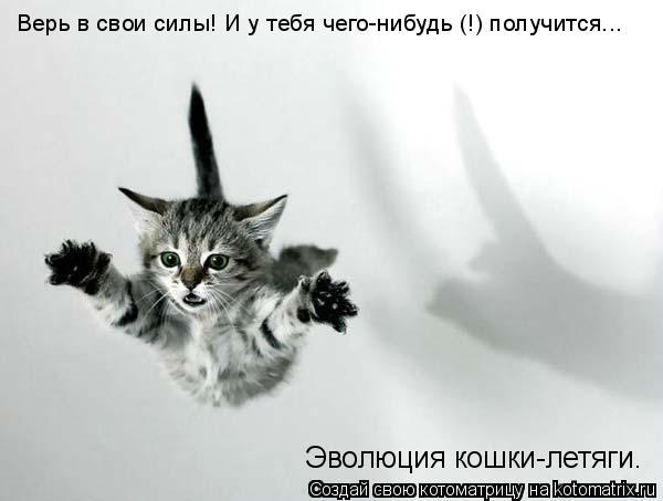 Котоматрица: Верь в свои силы! И у тебя чего-нибудь (!) получится...  Эволюция кошки-летяги.