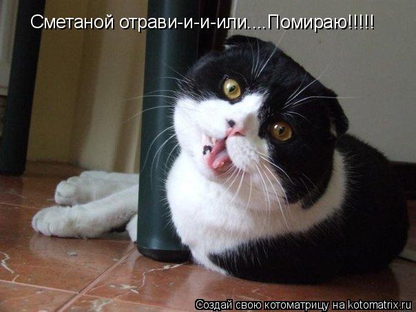 Котоматрица: Сметаной отрави-и-и-или....Помираю!!!!!
