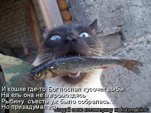 Котоматрица: И кошке где-то Бог послал кусочек рыбы На ель она не взгромоздясь Рыбину  съесть уж было собралась... Но призадумалась