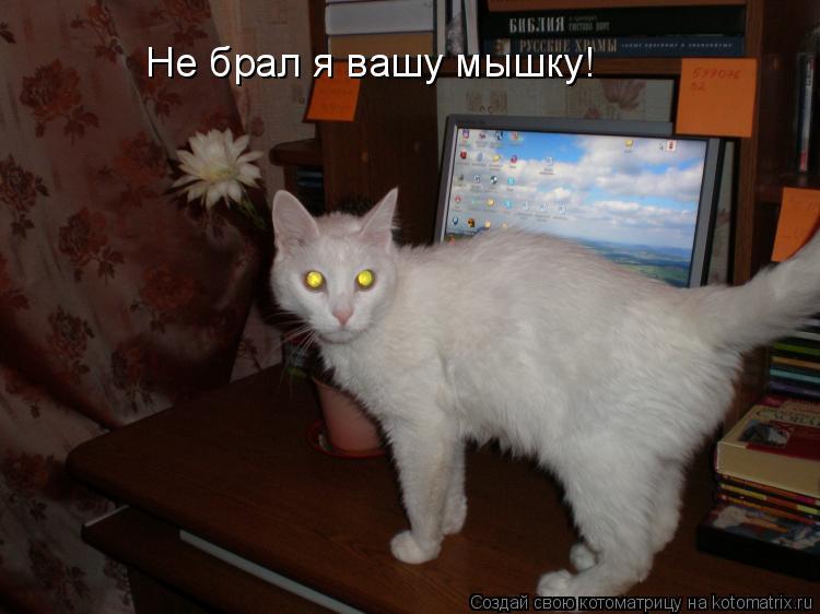 Котоматрица: Не брал я вашу мышку!
