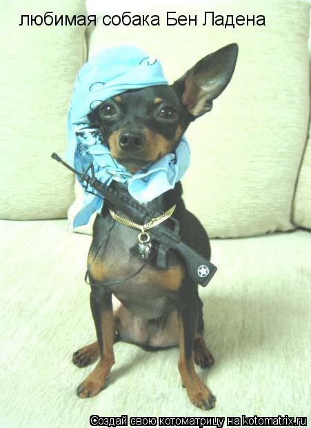 Котоматрица: любимая собака Бен Ладена