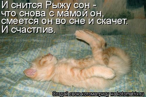Котоматрица: И снится Рыжу сон - что снова с мамой он, смеется он во сне и скачет. И счастлив.