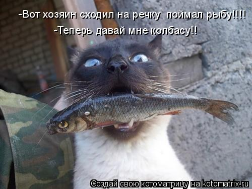 Котоматрица: -Вот хозяин сходил на речку  поймал рыбу!!!! -Теперь давай мне колбасу!!