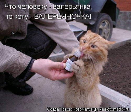 Котоматрица: Что человеку - валерьянка, то коту - ВАЛЕРЬЯНОЧКА!
