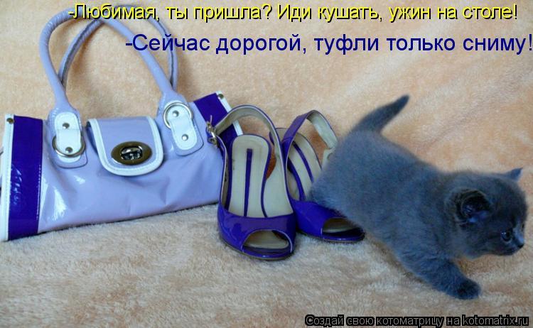 Котоматрица: -Любимая, ты пришла? Иди кушать, ужин на столе! -Сейчас дорогой, туфли только сниму!