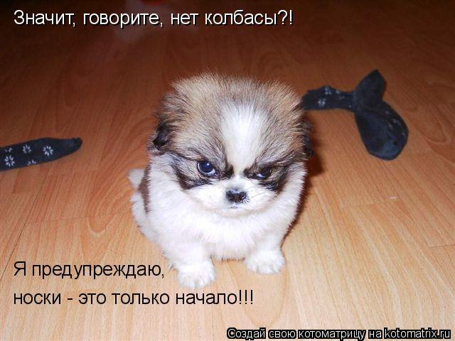 Котоматрица: Значит, говорите, нет колбасы?! Я предупреждаю, носки - это только начало!!!