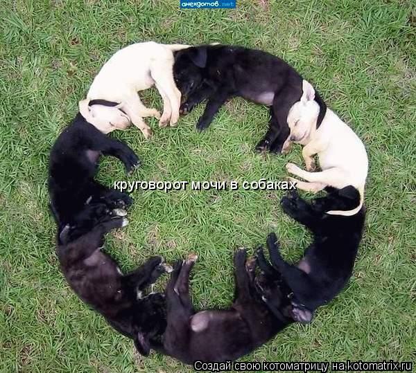 Котоматрица: круговорот мочи в собаках