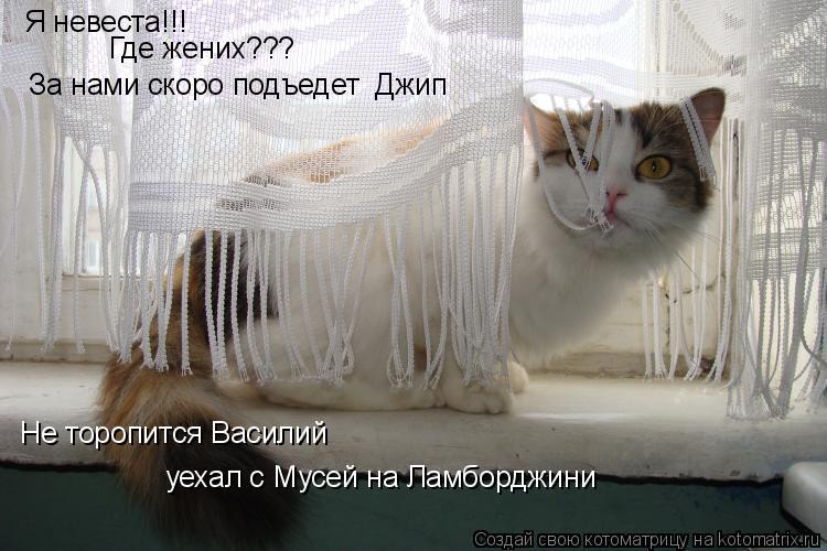 Котоматрица: Я невеста!!! Где жених??? Не торопится Василий уехал с Мусей на Ламборджини  За нами скоро подъедет  Джип