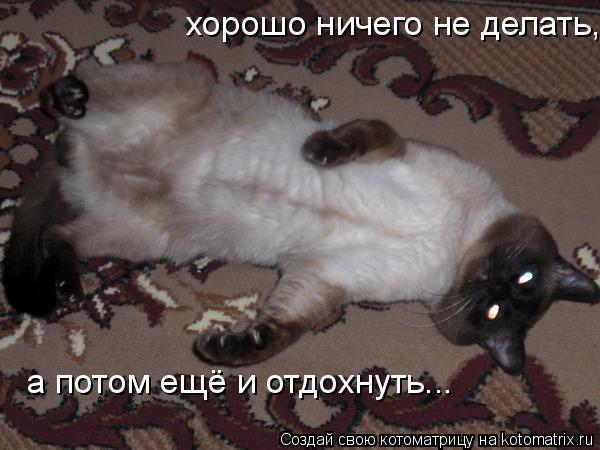 Котоматрица: хорошо ничего не делать, а потом ещё и отдохнуть...