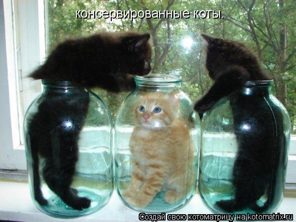Котоматрица: консервированные коты.